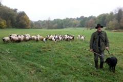 Tibor und die Ziegen